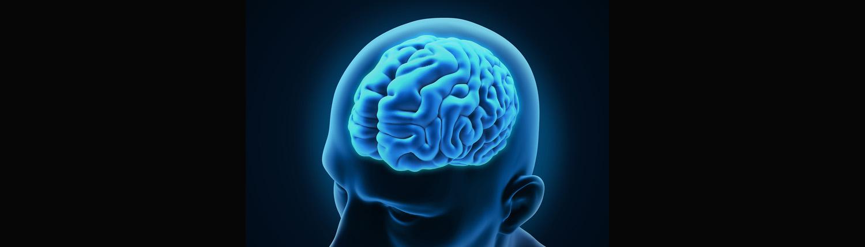 brain-in-human-head-1500x430
